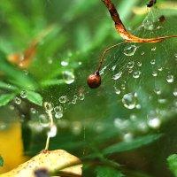 после дождя :: Максим Ершов