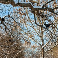 Зимнее кружево с птицами :: Юрий Яловенко