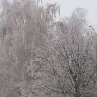 Деревья в инее :: Дмитрий Никитин