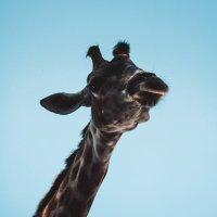 Zoo :: Анастасия Кучерявая