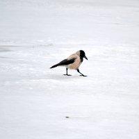Прогулка по тонкому льду :: Nina Streapan