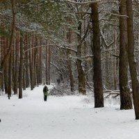 Прогулка в Загородном парке! :: Владимир Шошин