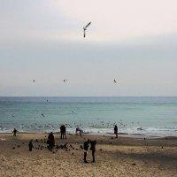 Зимой на пляже ( 2 ) :: Людмила