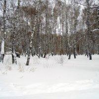 Берёзовое  зимнее безмолвие. :: Мила Бовкун