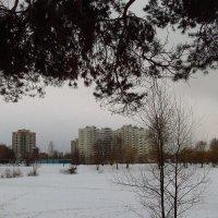 Зимние будни пруда :: Андрей Лукьянов