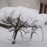 Снежный зонтик :: Svetlana Lyaxovich