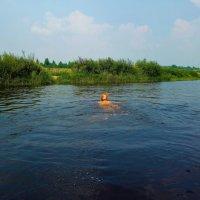Переплыть Мологу... :: Sergey Gordoff