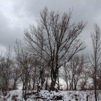 Дерева :: Dr. Olver  ( ОлегЪ )