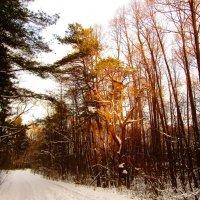 Освещённая зимним солнцем :: Андрей Снегерёв