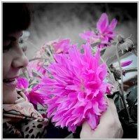 Розовый георгин. :: A. SMIRNOV
