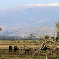 снег на горе  Хермон :: vasya-starik Старик