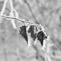 Зимний лист :: Вадим