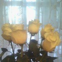 Белые розы.... :: марина ковшова