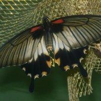 в музее живых бабочек :: tgtyjdrf