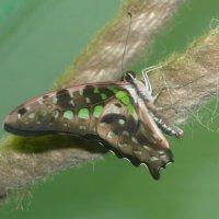 я музее живых бабочек :: tgtyjdrf