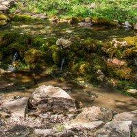 Вода из Святого Источника преподобного Давида в селе Талеж. :: Владимир Безбородов