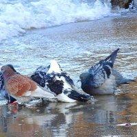 Голуби на море - ждут волны :: Маргарита Батырева