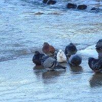 Голуби на море - после купания :: Маргарита Батырева