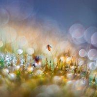 моя вселенная :: Sergey Bagach