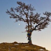 Дерево в сумерках :: Анатолий Иргл