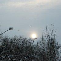 Утреннее солнце сквозь снежную порошу :: Надежда