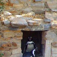 Пингвины - необычные птицы. :: Оля Богданович