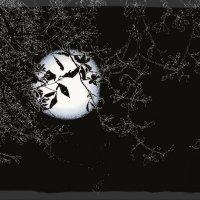 Занавеска кружевных ветвей :: Валерий Розенталь