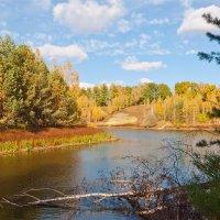 Лесное озеро :: Лариса Березуцкая