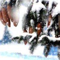Снежок... :: Марина