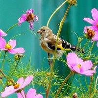 почти колибри - размером с цветок :: Александр Прокудин