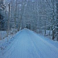 Зимняя лесная прогулка :: Натали Пам