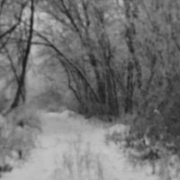 Таинственный лес. :: владимир