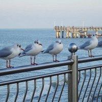 Чайки на море :: Маргарита Батырева
