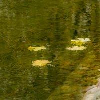Листья на воду упали.... :: Сергей Мягченков