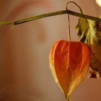 Осенний фонарик :: Yasnji