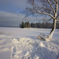 Зимний день. :: Vladimir
