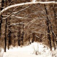 На прогулке в зимнем лесу :: Alexandr Zykov