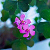 какой то цветочек на окне)) :: Вячеслав Цуркан