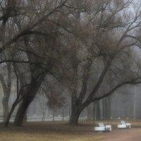 В весеннем тумане.... :: Юрий Цыплятников