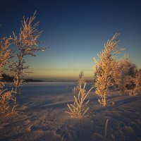 Околдован лес стоит, чудной жизнью он блестит 11 :: Сергей Жуков