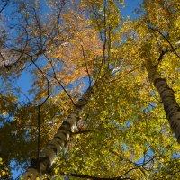 Осень :: Александр Попков