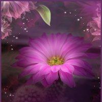 Цветочек аленький, или кактус расцвел... :: Елена Миронова