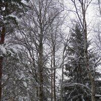 Ты моя дачная зима, моя зимняя дача... :: Регина Пупач