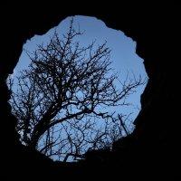 дерево жизни :: Армен Джавакян