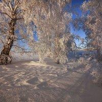 Околдован лес стоит, чудной жизнью он блестит 12 :: Сергей Жуков