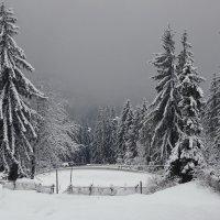 Белым снегом зима запорошила... :: Liliya