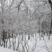 Прогулка по морозцу... :: Тамара (st.tamara)