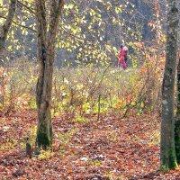 Осень.  Наедине с  природой. :: Ivana