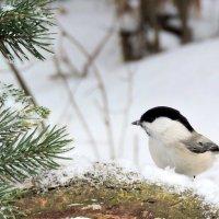 С Новым Годом Вас друзья , от всех птичек и меня !!! :: Hаталья Беклова
