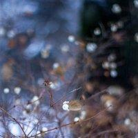 Зимой. :: Ольга Лапшина